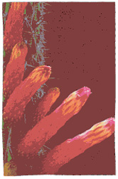stranocactus.jpeg